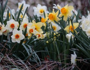 2013-4-9 Spring in DickeyvilleIMG_7869 Cassie Sherman Marks